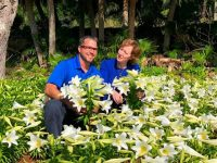 Bermuda Easter Lilies Set to Reach Windsor Palace Today