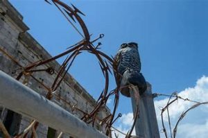 Minister Responds to TNN Report on Flaws in Prison Security System at Westgate