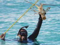 Cap Set at 375 for Recreational Lobster Diver Licences for 2019-2020 Season