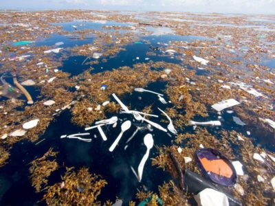 The Telegraph: Caribbean Sea Being 'Choked to Death by Human Waste'