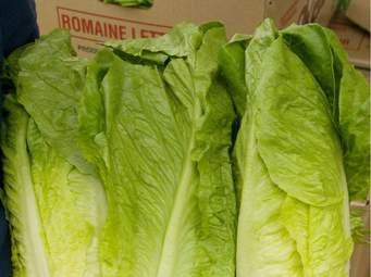 Department of Health Issues Romaine Lettuce Advisory