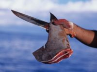 St Vincent Bans Shark Fin Fishing & Parrot Fish Harvesting