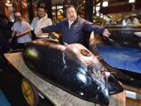 'Tuna King' Forks Out £1.4m For Giant Fish Weighing More Than a Pig