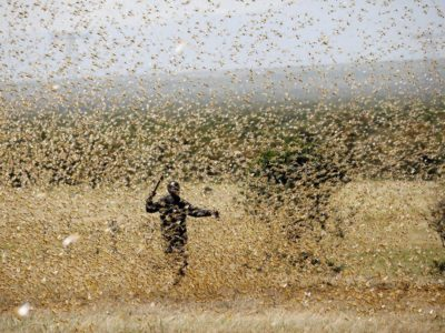 Massive Locust Swarms Big Enough to Cover New York Put Millions of East Africans at Risk of Famine