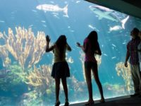 Bermuda Aquarium Museum & Zoo to Re-Open on July 6