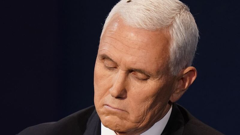 A Fly Lands In Pence S Hair During The Debate Twitter Goes Wild Bermuda Real