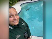 Pool-Crashing Alligator Kicked Out Of Florida Pool