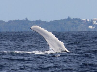 DENR Issues Whale Watching Etiquette Advisory Due To 'Reckless Boaters & Swimmers'