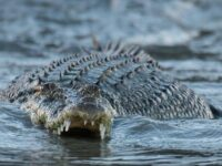 Brit Fights For Life As Twin Sister Rescues Her From Crocodile's Jaws On Dream Holiday