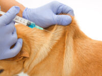 Dog Vaccination Drive Against Canine Parvovirus – West End Site