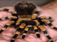 Landlord Finds 19 Tarantulas, 1 Python Left Behind By Tenant